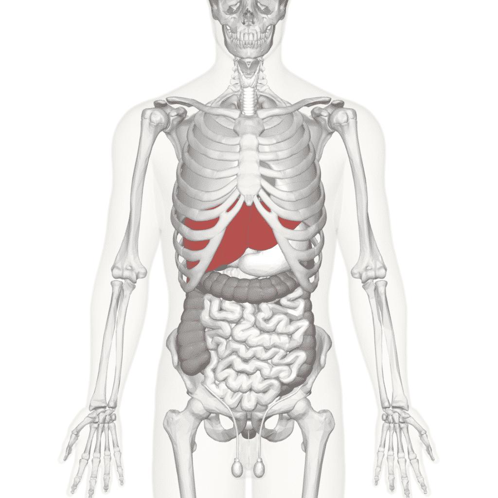 Хронический гепатоз
