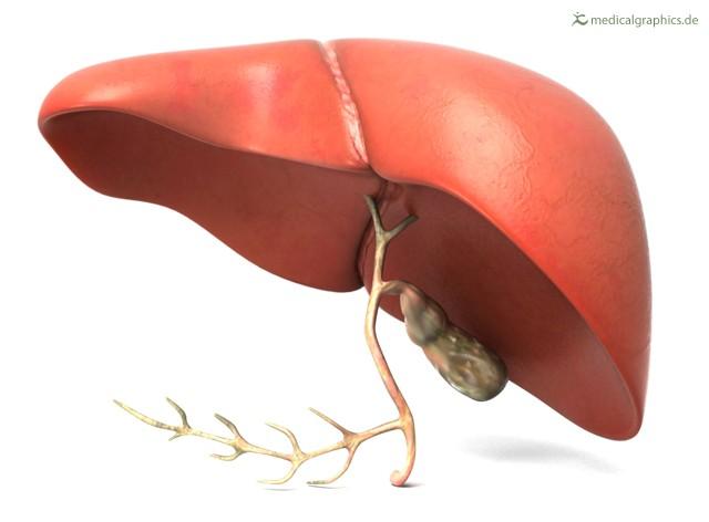 Как лечить жировой гепатоз в домашних условиях народными средствами быстро и эффективно: травы, расторопша, диета