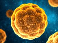 Что такое гепатит А, как он передается, симптомы, диагностика и лечение
