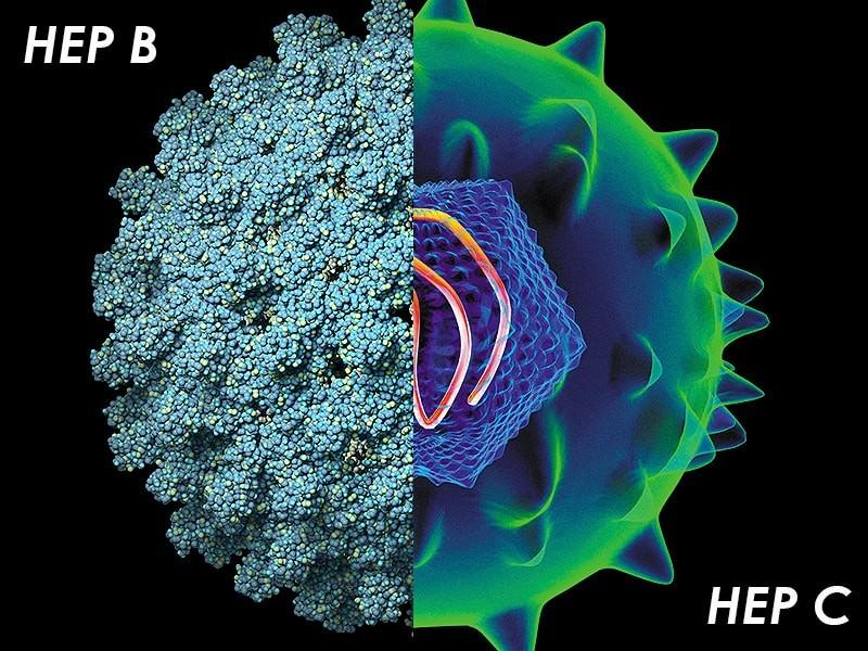 Гепатит В и гепатит С