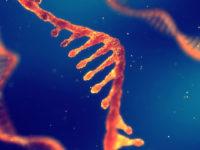 Анализ ПЦР на гепатит С качественный: расшифровка результатов