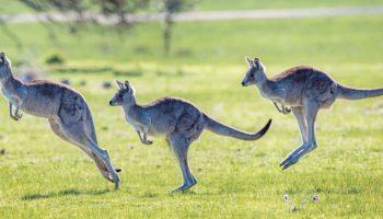 Носительство австралийского антигена: опасен ли носитель HBsAG?