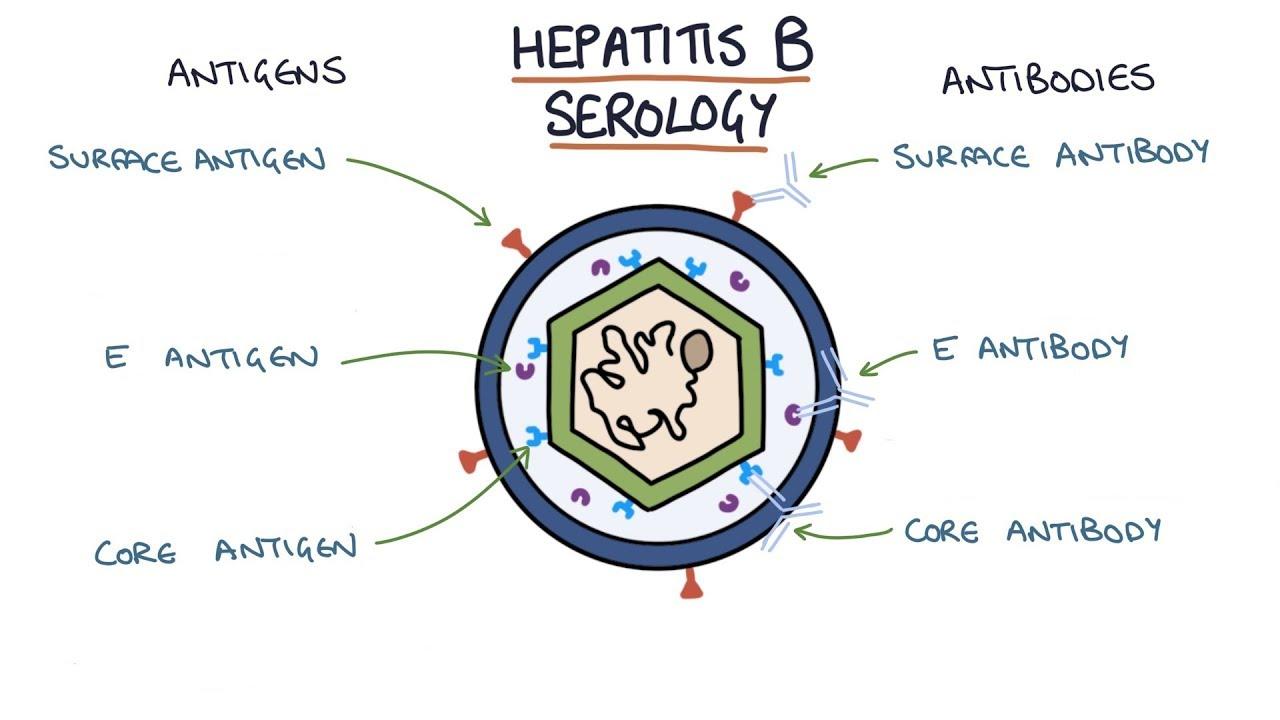 Антигены и антитела к гепатиту В
